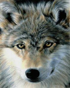 young wolf by carla kurt