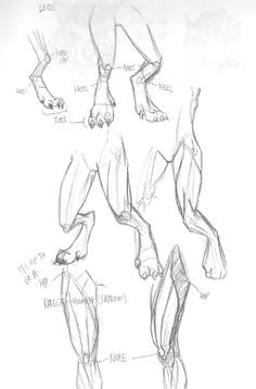dragon feet drawings google search