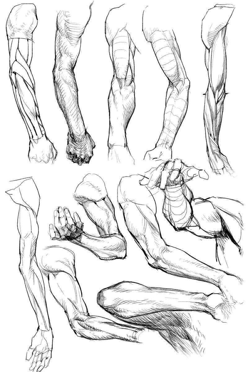 anatomy study how to draw anatomy hand anatomy human anatomy drawing arm