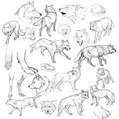bemelega tes vazlatok rajz hogyan kell kezdeni wolf sketch sketch drawing drawing poses