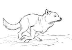 when you run make sure you run to something and not away from something wolf