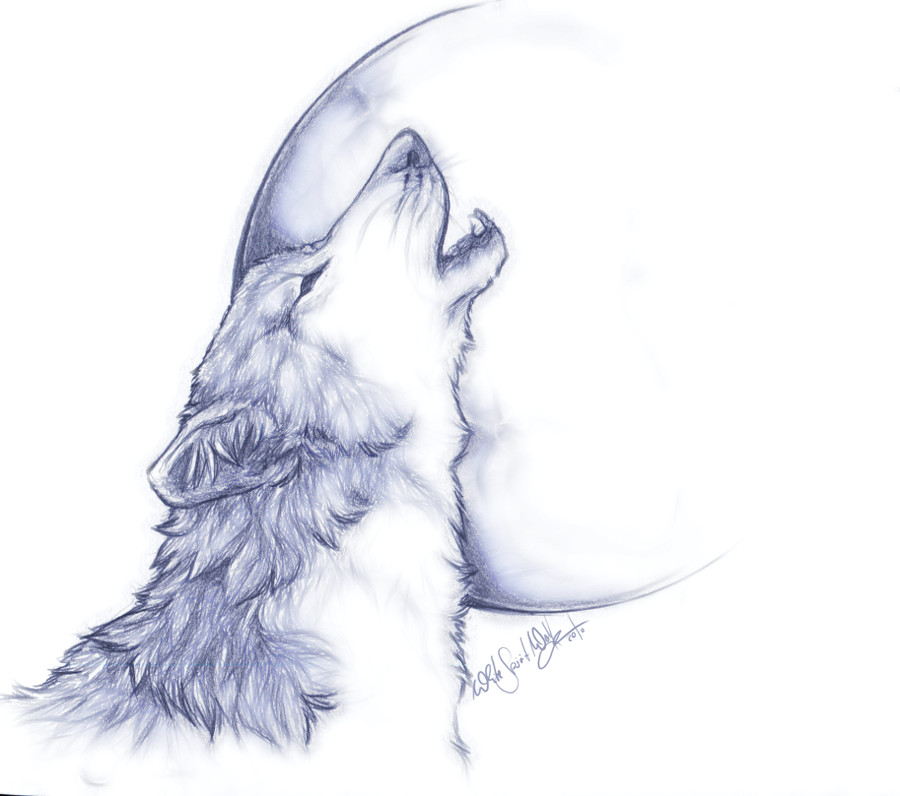 white wolf howling drawing about animals