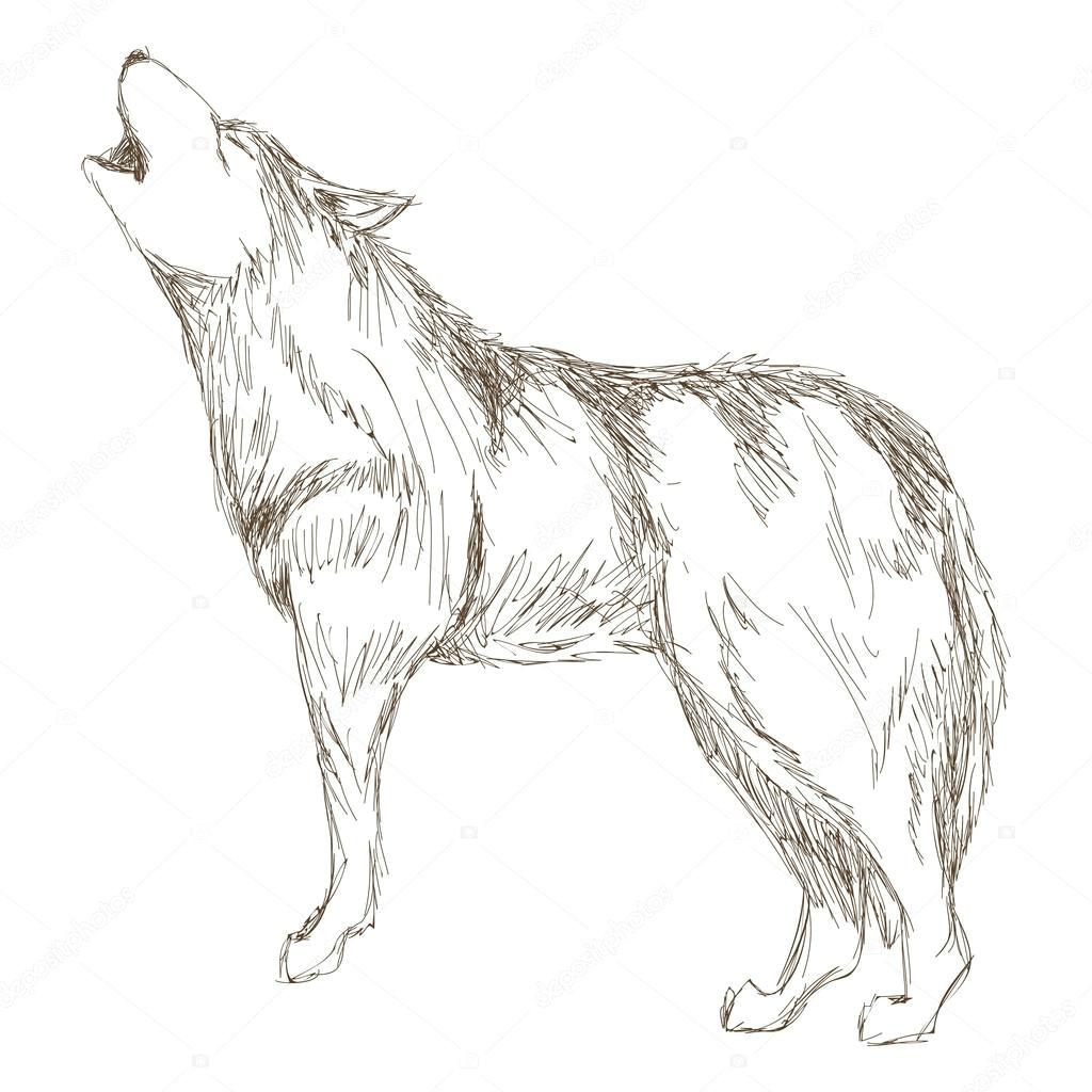 prosty projekt pa aski wilk sideview szkic ikona wektor ilustracja zwierza t wektor od jemastock