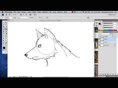how to draw a wolf in photoshop photoshop tutorials