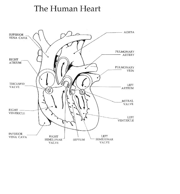 heart jpeg