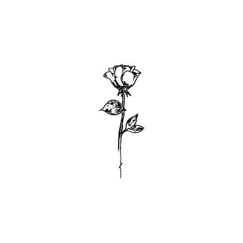 imagen de rose art and flowers
