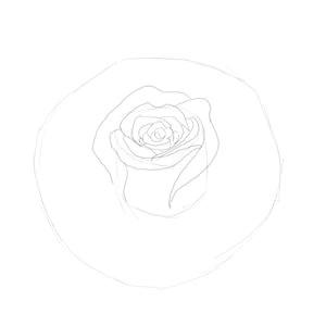 rose bud sketch 3