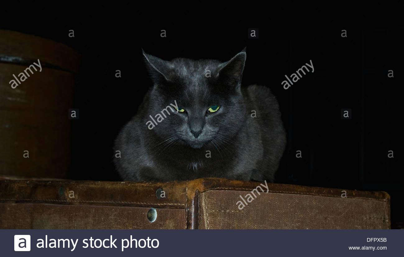 grey cat evil cat mysterious cat stock image