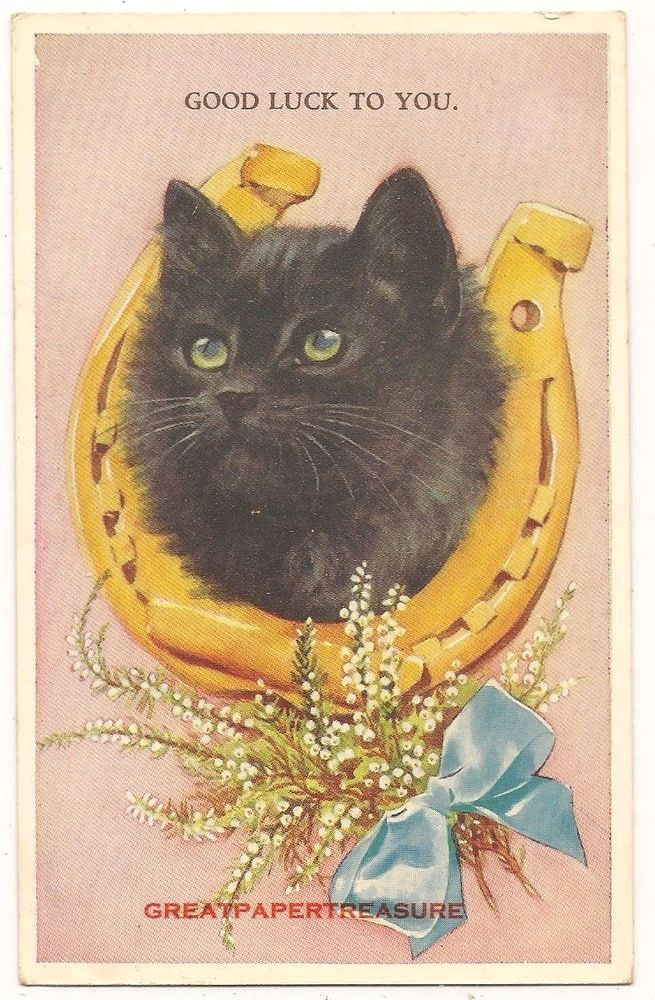lucky black cat postcard no 5249 by valentine horseshoe white heather