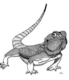 view gallery with 37 bearded dragon drawing images
