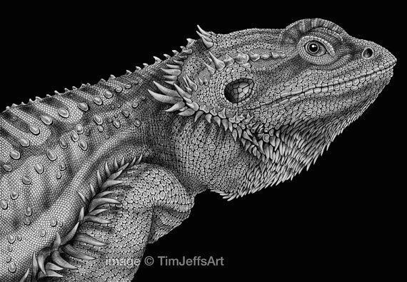 bearded dragon ink drawing by timjeffsart on etsy 50 00
