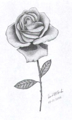 rose drawings these drawings of roses have been adapted from images from my