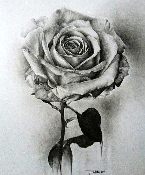 rose drawings pencil drawings of flowers beautiful flower drawings realistic pencil drawings