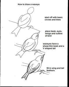 Drawings Of Birds Eyes 17 Best Birds Images Drawing Birds Bird Drawings Birds