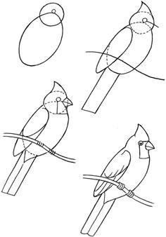 how to draw birds bird art drawing birds cardinal drawing bird drawings