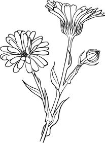 active herbs wilderland organics leaf tattoos black tattoos watercolor tattoo flower drawings