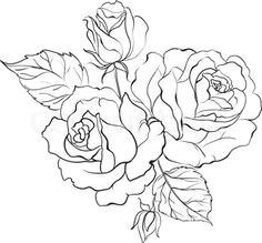 white rose bouquet of roses isolated on white background illustration illustration