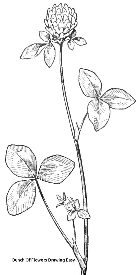 bunch of flowers drawing easy how to draw clover blossoms a flower drawing tutorial of bunch