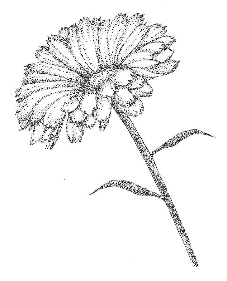 calendula october new tat maybe flower sketchesflower