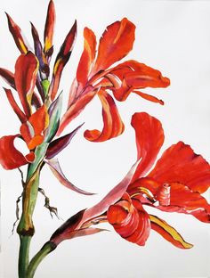 botanical drawings botanical prints botanical illustration illustration art watercolor flowers watercolor