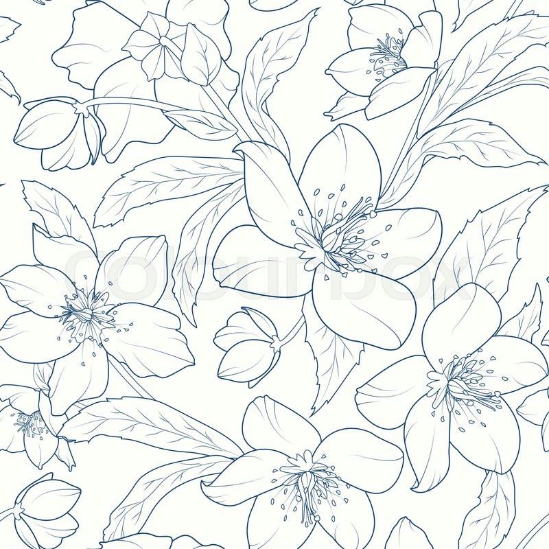 christmas rose lenten rose winter rose helleborus niger detailed sketch drawing dark blue on white background vector