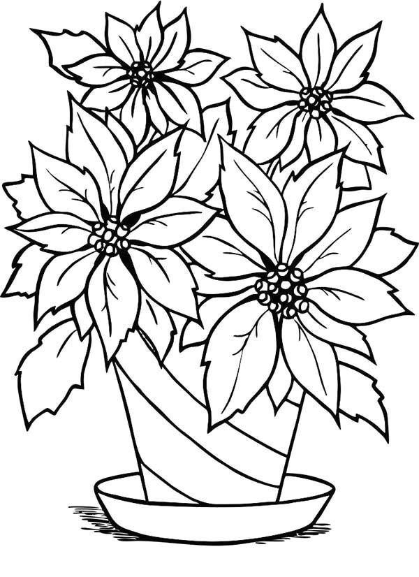 charming poinsettia flower in flowerpot coloring page christmas flowers christmas colors poinsettia flower