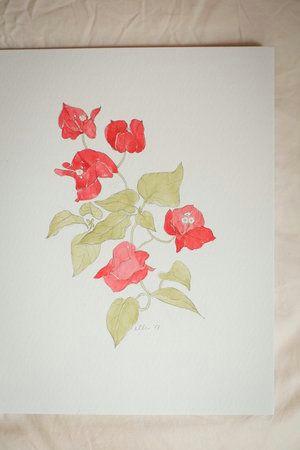 erin ellis botanical flowering vines watercolor drawings 9 2 jpg