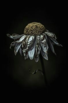artistic nature flower feeling frazzled in a delighted way by alan shapiro death painting
