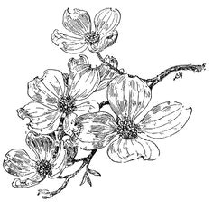 dogwood on my shoulder dogwood flower tattoos peonies tattoo flower sketches flower
