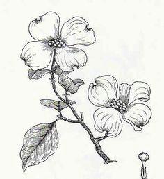 cool dogwood flower tattoos dogwood flowers dogwood trees flor magnolia flower sketches
