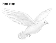 dove realistic art pencil drawing images pencil drawing images dove drawing drawing clipart