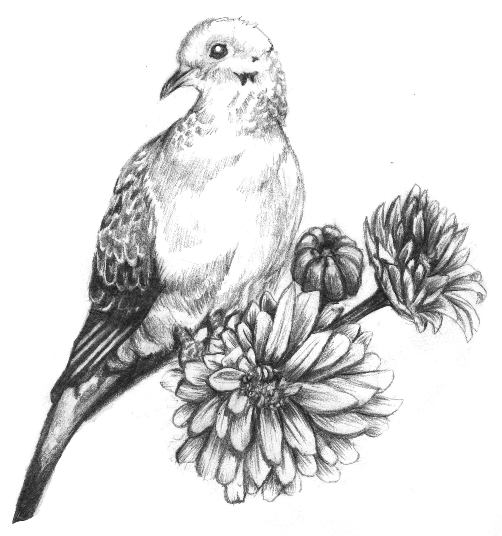 mourning dove tattoo mourning dove tattoo