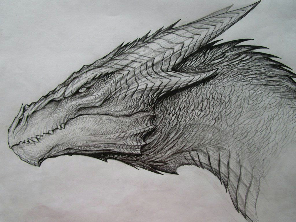 image result for dragon drawing