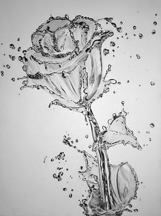 water rose just add flower water artist said the quickest drawing i think i have ever done just to keep the whole water genre going i thought i would