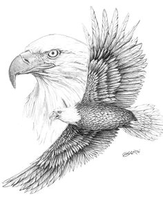 bald eagle sketch bing images eagle sketch bird sketch bird drawings animal