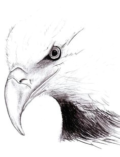 american eagle by peter landis
