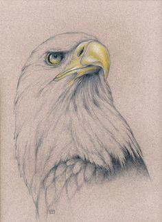 pencil eagle drawing bird drawings pencil drawings animal drawings eagle art