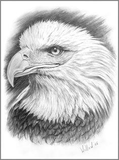 eye of the eagle pencil art drawings easy drawings drawing sketches sketching