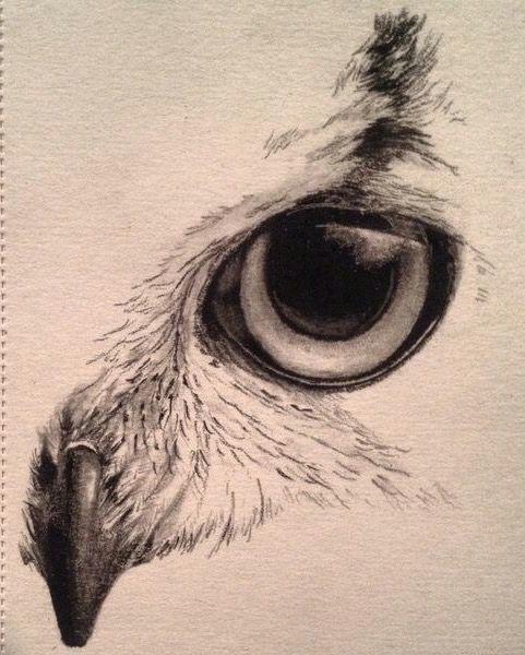 eagle eye owl eyes elephant face drawing tiger face drawing animal skull drawing