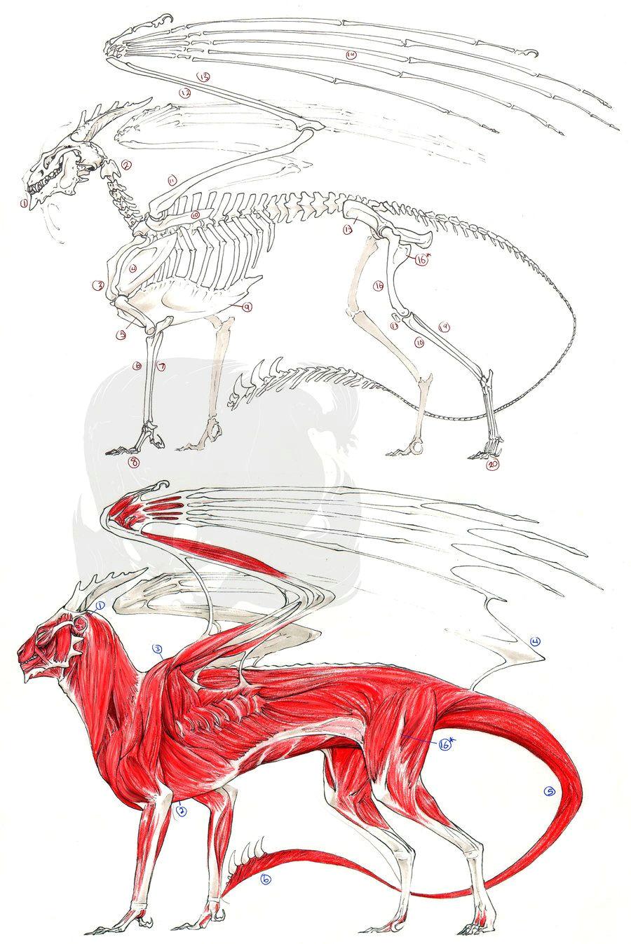 european dragon anatomy by pythosblaze deviantart com