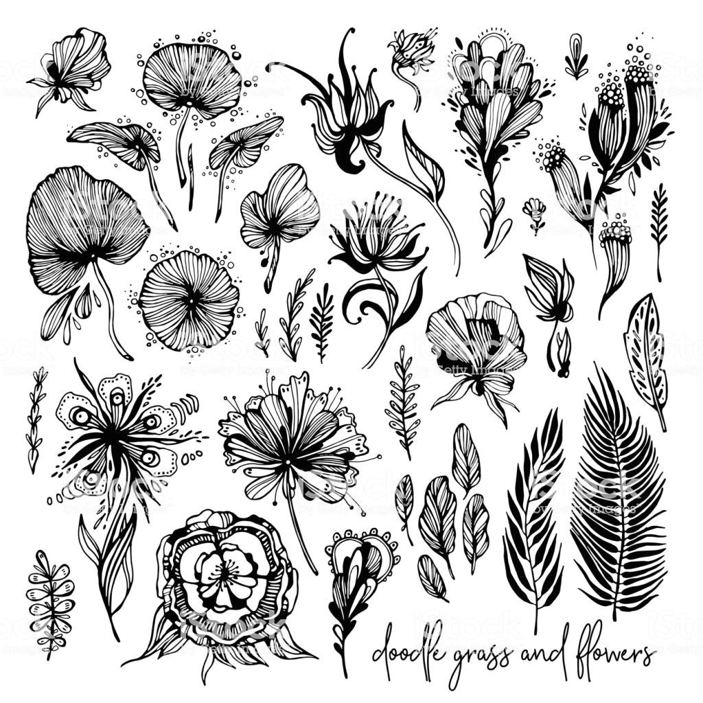 set of black and white exotic flowers illustration