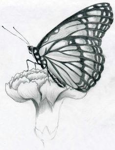 butterfly pencil drawings in few easy steps