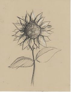 sunflower sill life drawing lesson pencil sketches of flowers sunflower sketches pencil drawings of