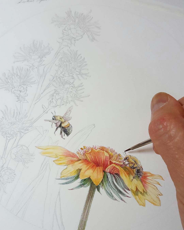 more bumblebees for pollinatorpartnership pollinators flowers bees botanical drawings botanical