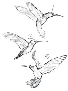 sketches of hummingbirds with flowers google search hummingbird sketch hummingbird tattoo watercolor hummingbird
