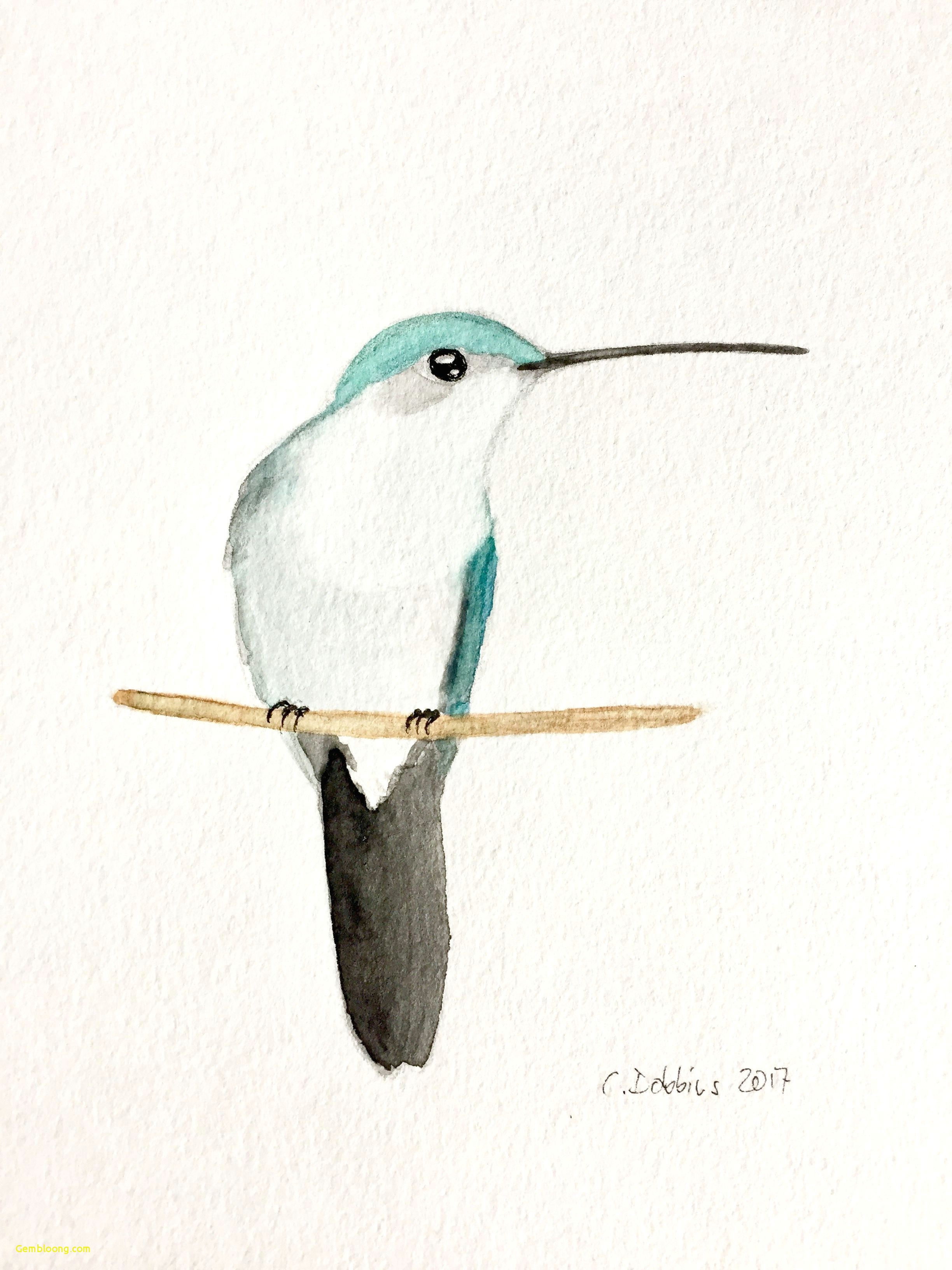 24 drawings of hummingbirds and flowers entertaining ruby throated hummingbird female juvenile awesomedrawings