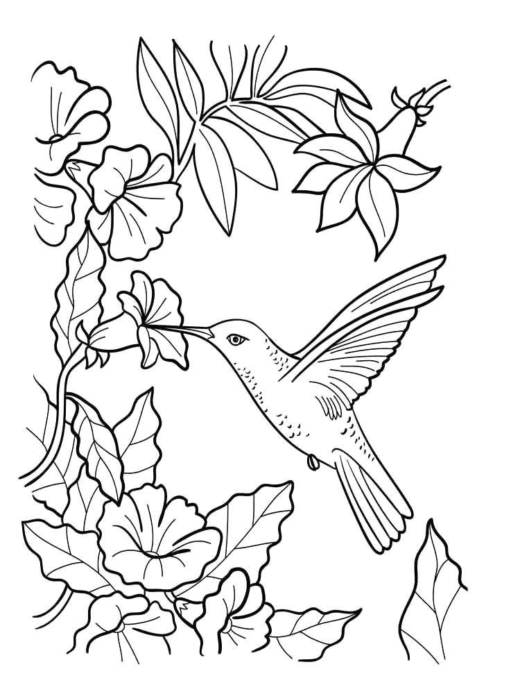 coloring pages hummingbirds vases flower vase coloring page pages flowers in a top i 0d