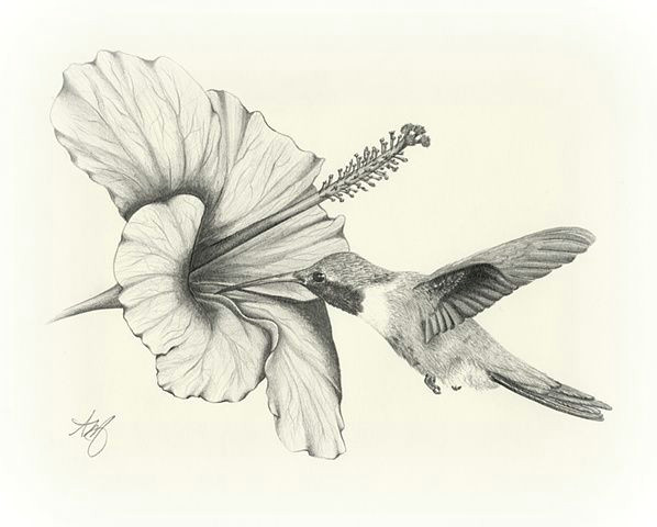 black and white images of hummingbirds sketches of hummingbirds draw bison pencil sketches of hummingbirds