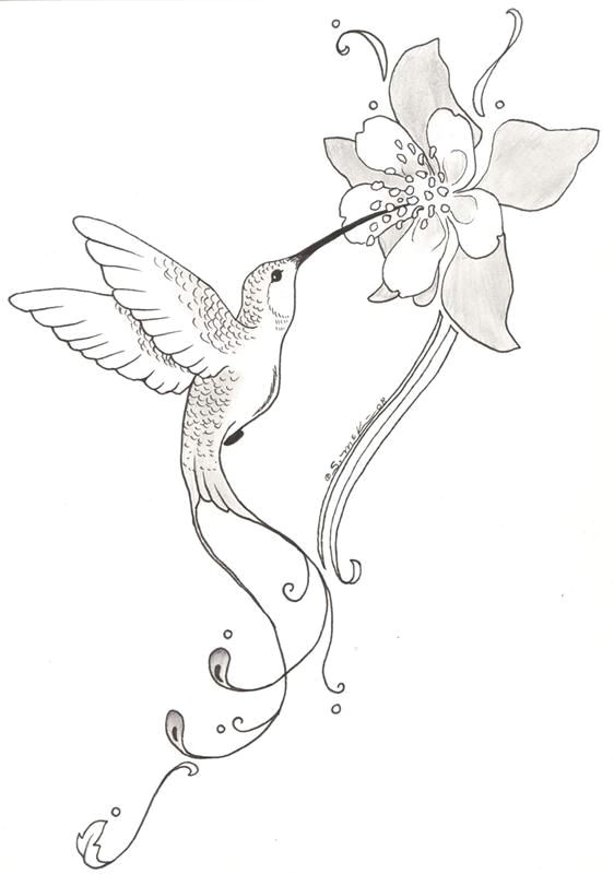 Drawings Of Flowers and Hummingbirds Nichole Radman Cook I Love This Flower with A Different Hummingbird