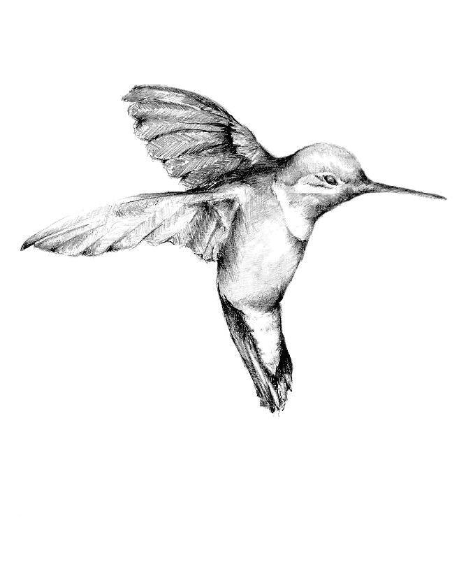 realism black white and gray drawing hummingbird tattoo